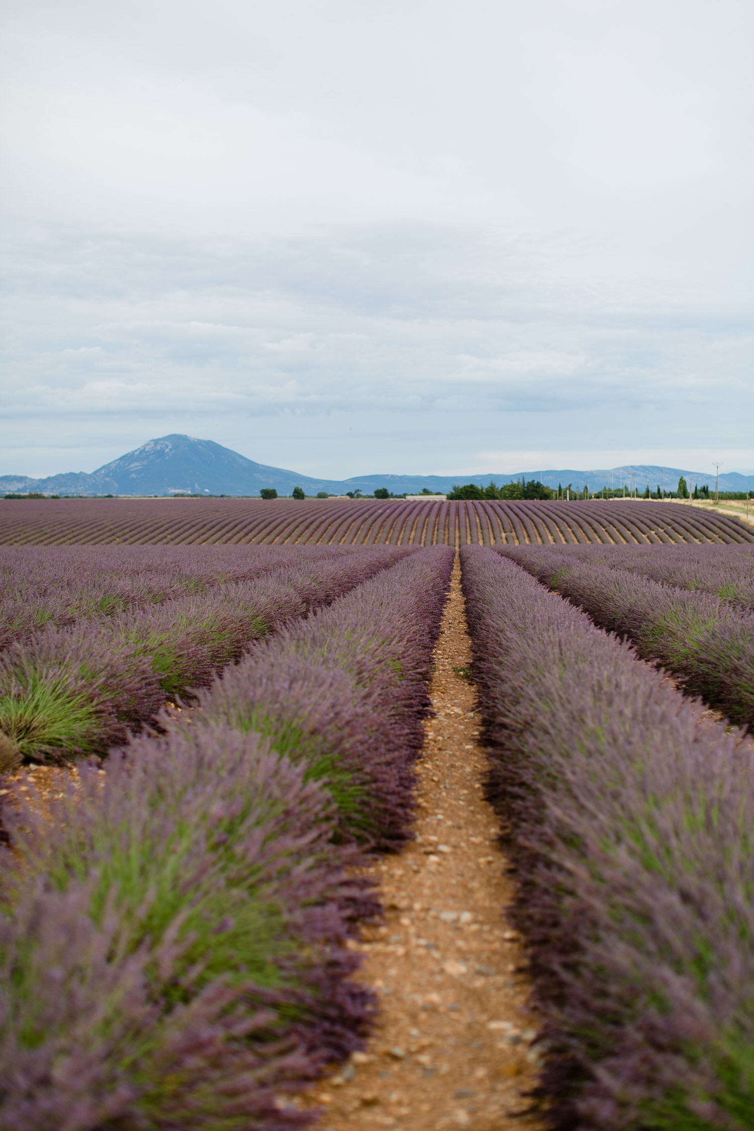 Valensole in der Provence